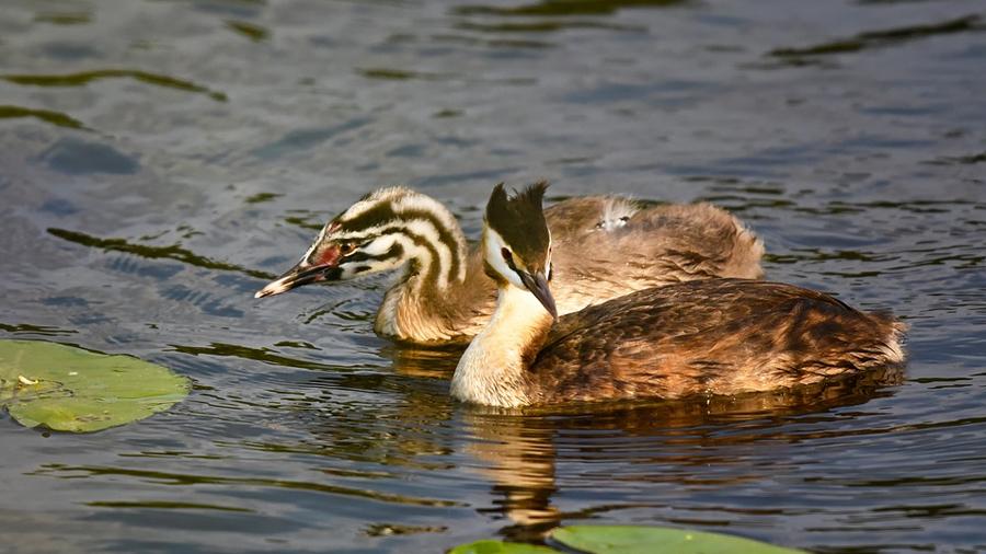 Observación de aves en el Bajo Aragón